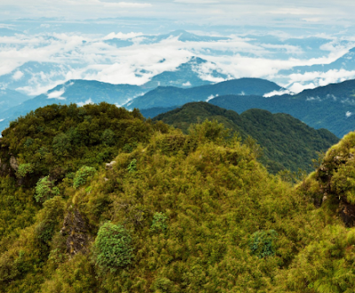 Forest and Vegetation Types of Nepal - Forest