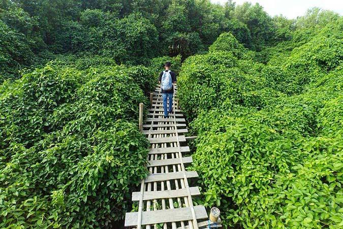 Dlium.com Wana Tirta Mangrove Forest