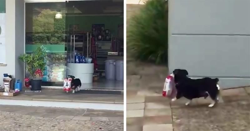 Pituco: Ο σκύλος που αγοράζει κάθε μέρα μόνος του το φαγητό του! (βίντεο)