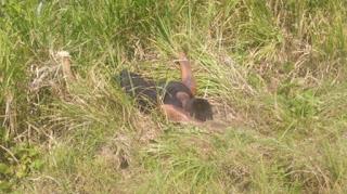 Avientan a presunto ejecutado carretera Alvarado-Lerdo de Tejada