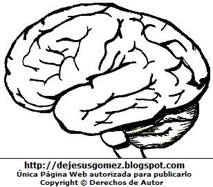 Dibujo del cerebro del cuerpo humano para colorear pintar imprimir - Vista Lateral del cerebro. Dibujo del cerebro de Jesus Gómez
