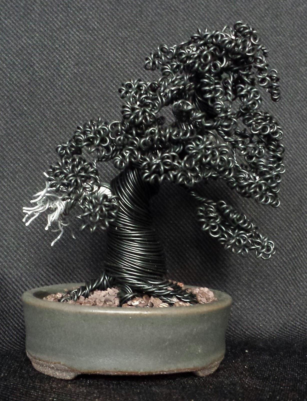 Bonsai Tree 20 Amazing Dragon Bonsai Pictures