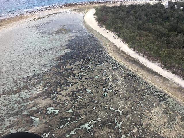 Lady Elliot Island Great Barrier Reef Australia