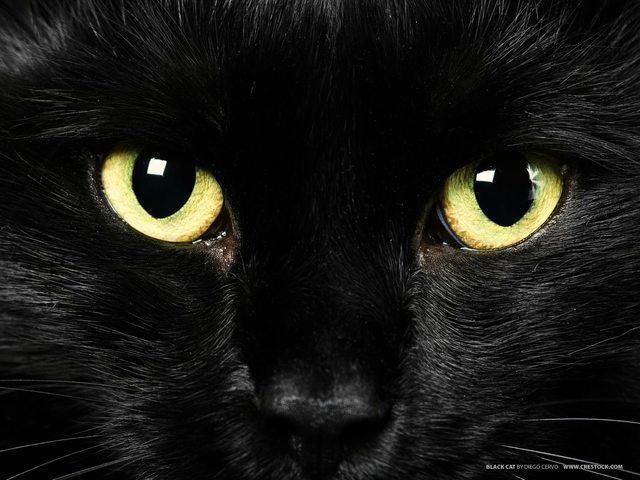Scodinzolo Volevo Un Gatto Nero
