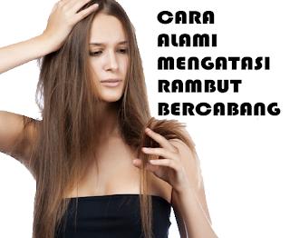 tips memperbaiki rambut bercabang