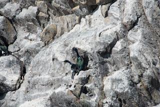 Cormorants hugging it out on Mendarte Island