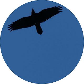 Vogelschattenbild