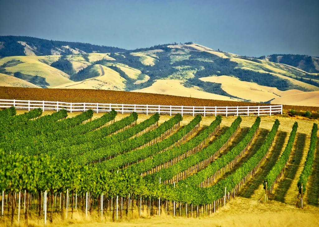 Sean P  Sullivan - Washington Wine Report: Walla Walla
