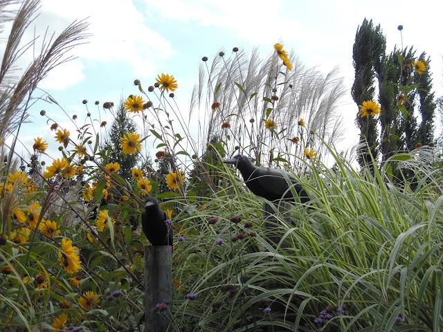 ozdoby ogrodowe, rabata bylinowa