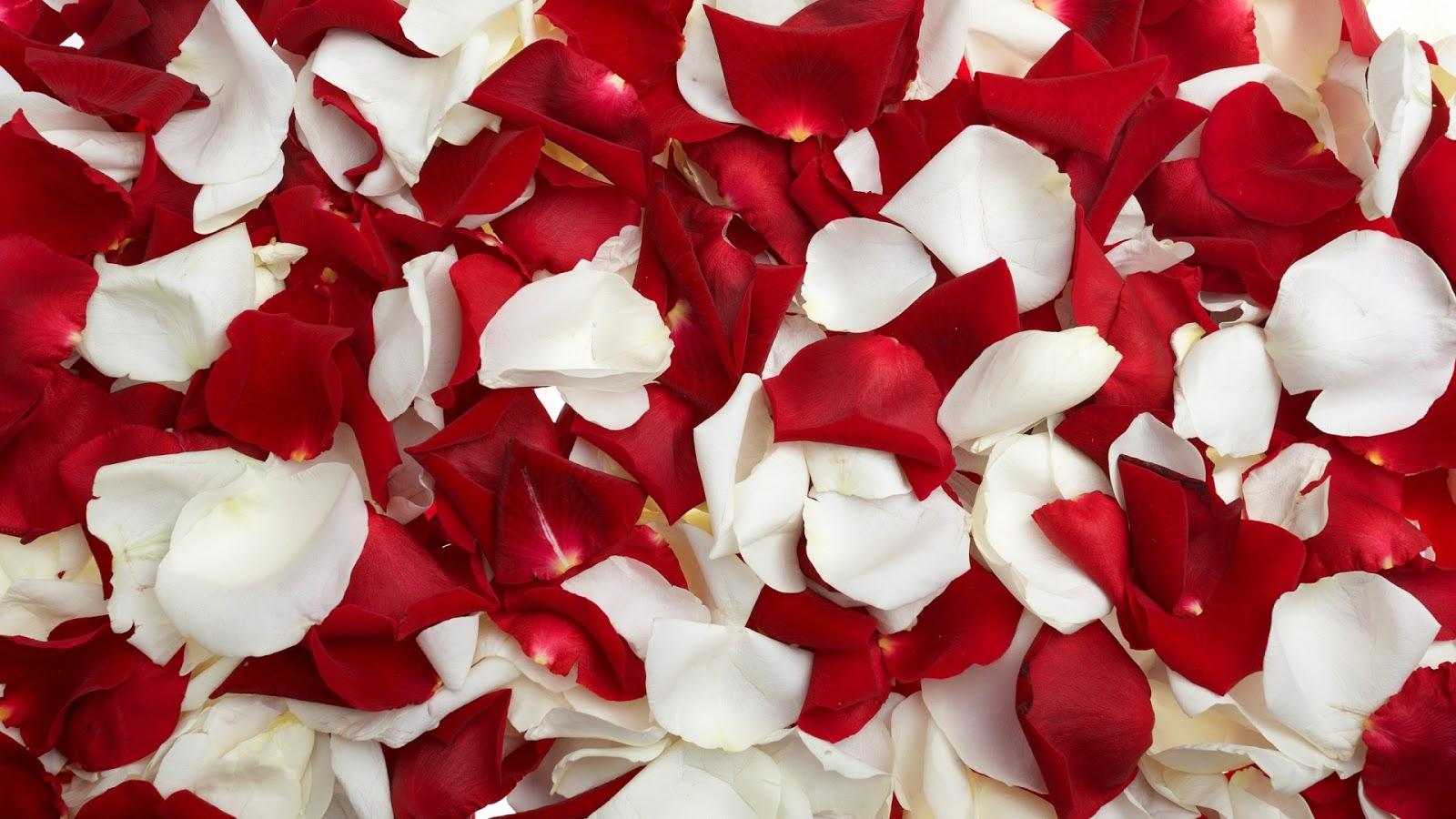Valentijns achtergrond rozen blaadjes hd wallpapers - Red rose petals wallpaper ...