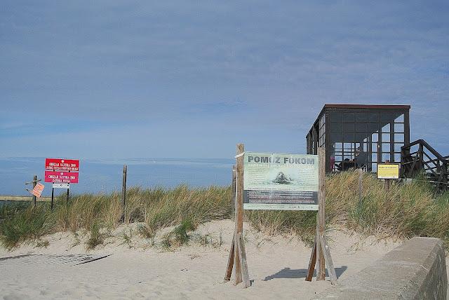 Foki, Hel, plaża, gdzie spotkać?
