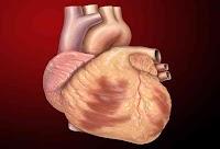 ما هو القلب و الدم - (تعريف - دورة - أوعية - مكونات - فصيلة)