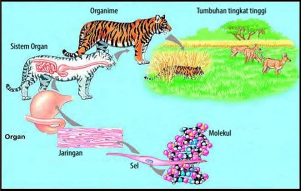 10 Tingkat Organisasi Kehidupan Dalam Objek Kajian Biologi