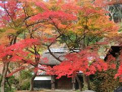 円覚寺の紅葉