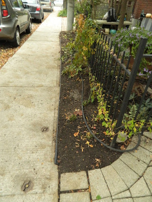 Cabbagetown Front Yard Fall Cleanup after by Paul Jung Toronto Gardening Services