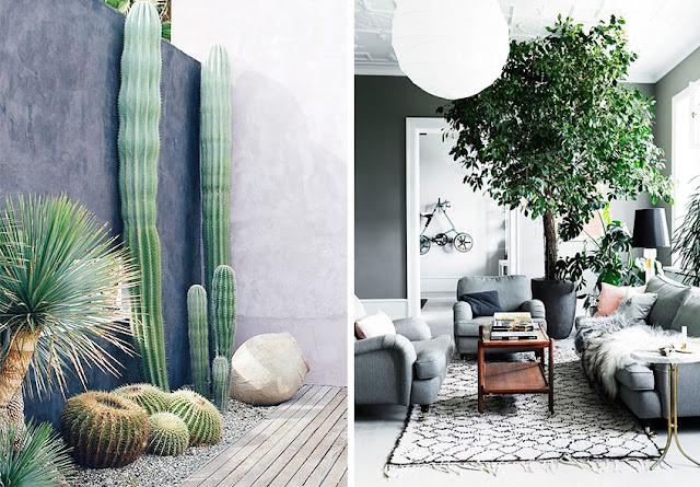 decoración plantas