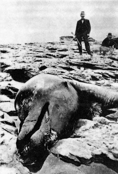 foto jaman dahulu yang bikin bulu kuduk merinding