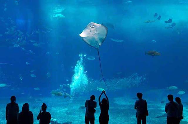 aquarium, Churaumi, fish, Okinawa, people, travel