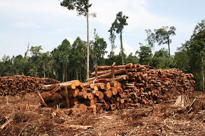 Tropical deforestation and forest degradation account for as much as 19% of global greenhouse gas