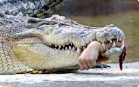 фото крокодила напавшего на человека