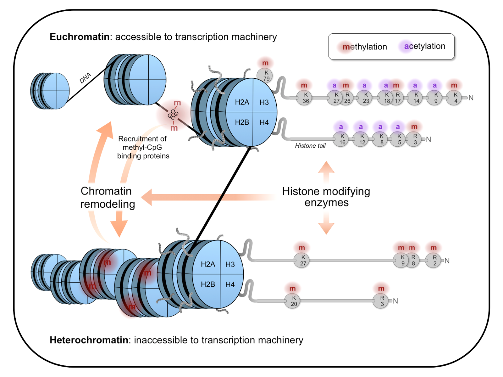 Forty-Four and Two: The chromatin code