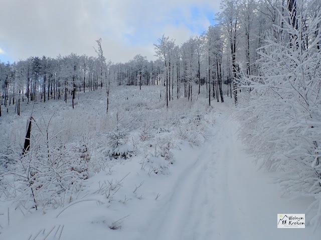 Kalenica szlak czerwony zima