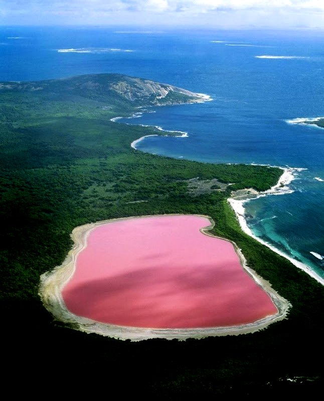 the flying tortoise  australia u0026 39 s particularly peculiar pink lake hillier