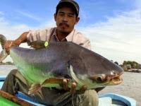 Olcsó halnak mérgező a leve is: Pangasius átverés - VIDEÓVAL!