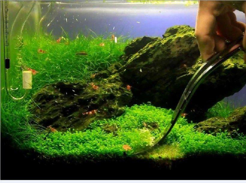 Aquascape ImagesAquascape Images