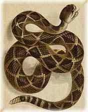 معلومات هامه عن الثعابين snakes