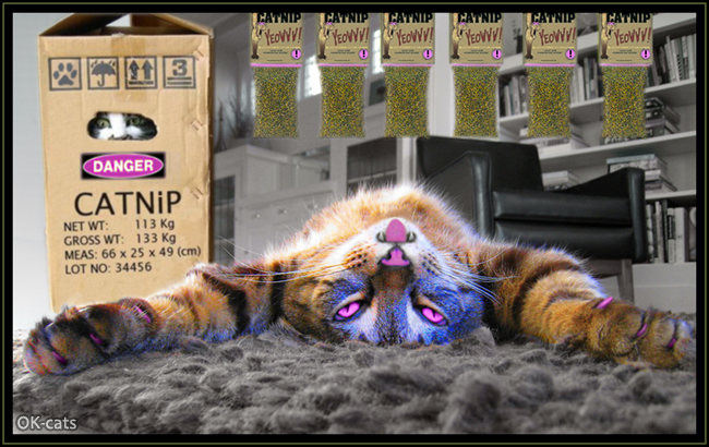 Photoshopped Cat picture • When your cat is high on catnip = pink dreams!