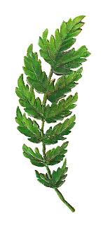 leaf image clipart botanical art digital download