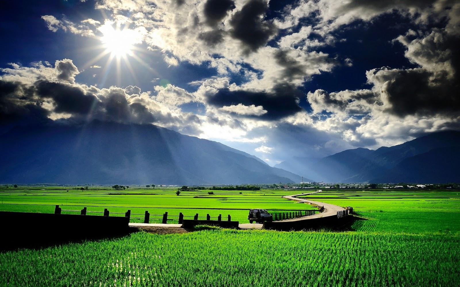 gambar pemandangan sawah yang indah
