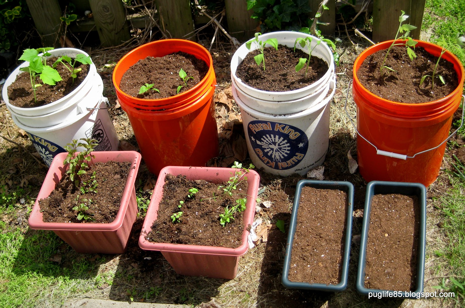 DIY: Container Vegetable Garden – This Pug Life
