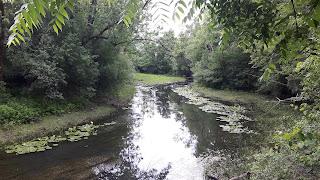 rivière, arbre, parc-nature du Bois-de-Liesse l'été