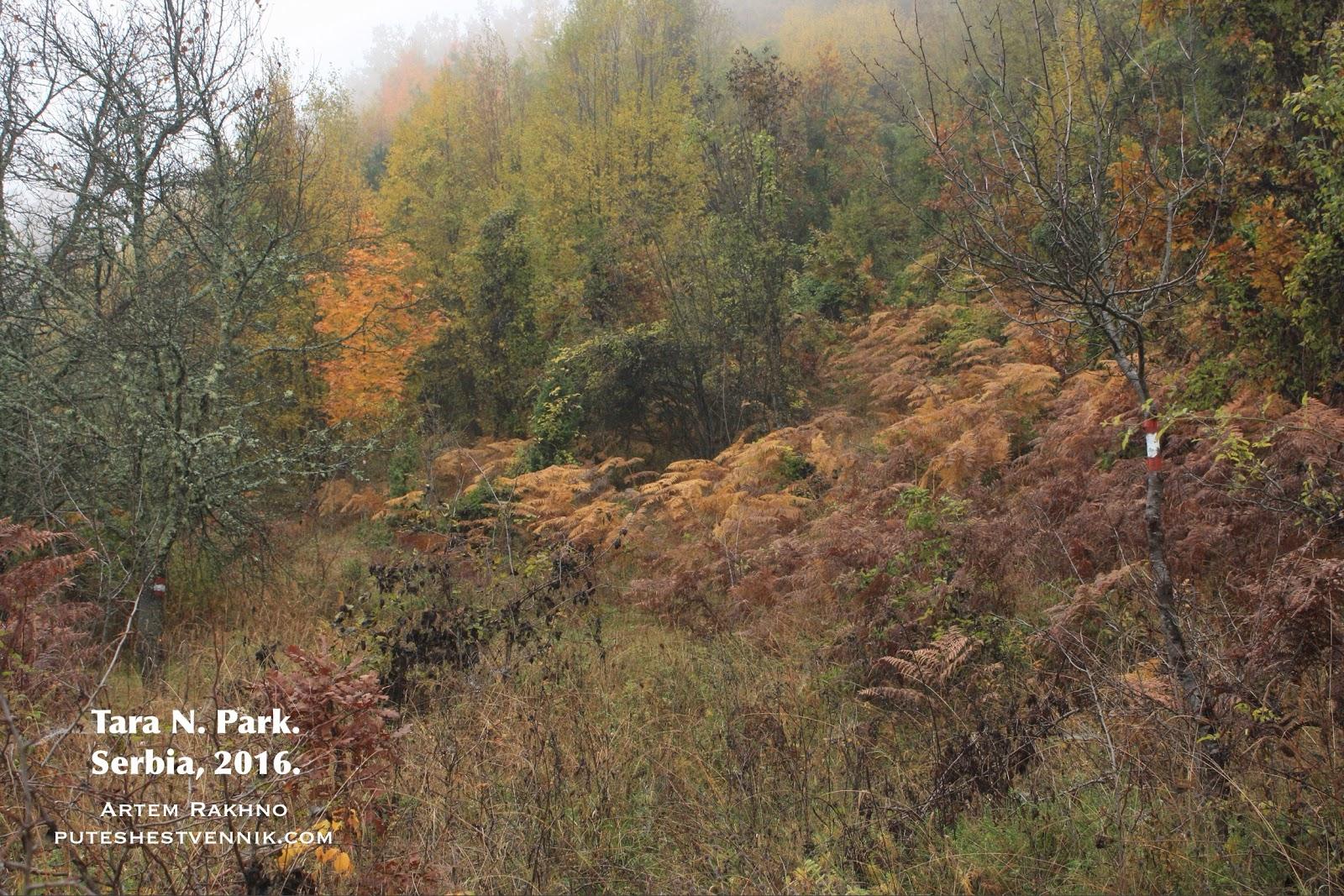 Метки тропы на тонких деревьях