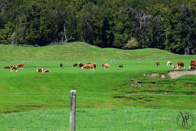 cow, farm, trees