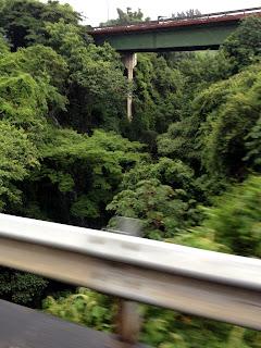Vegetation under Costa Rica highway bridge