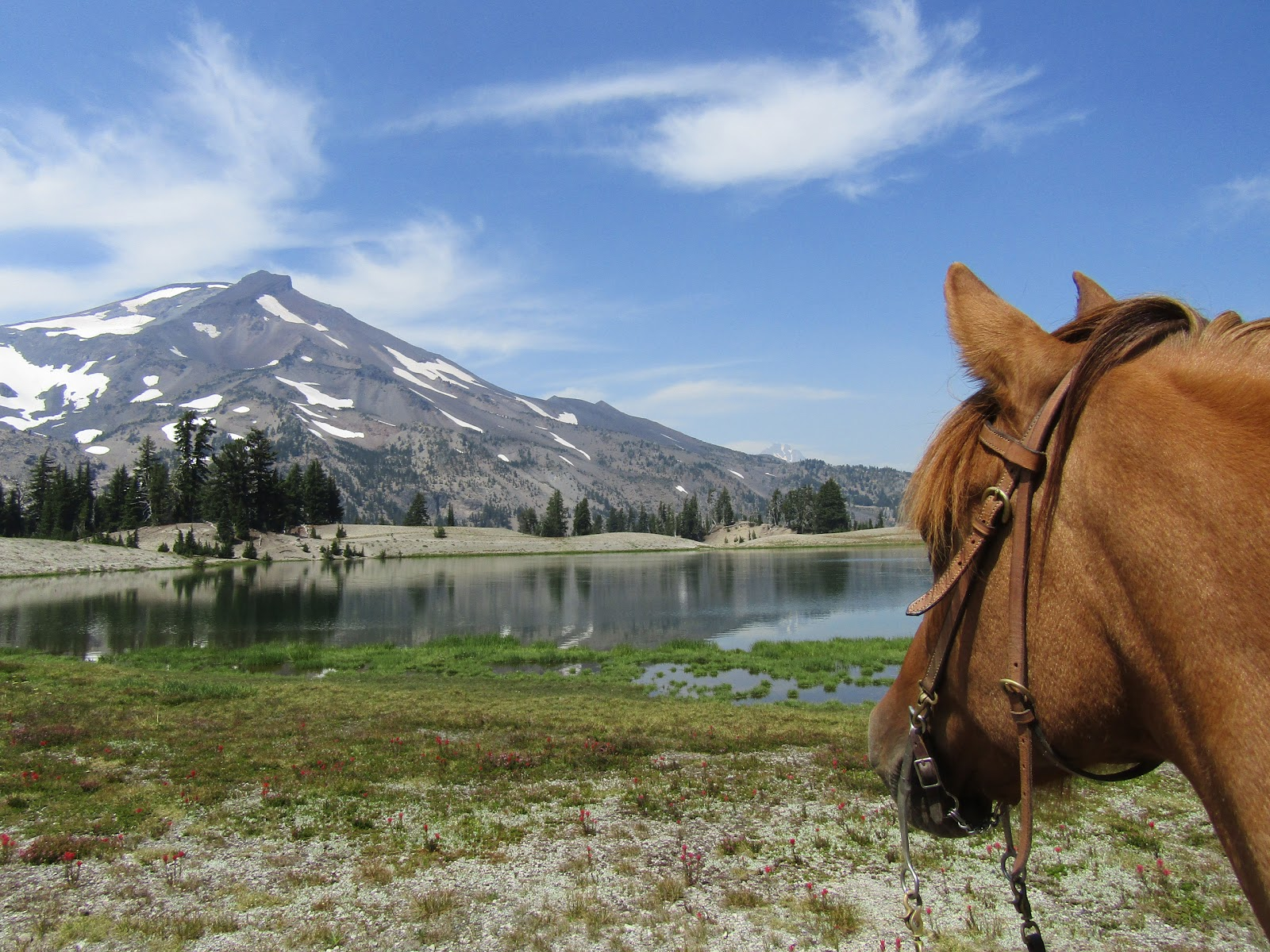 Holly Blogs Her Adventures: Todd Creek Horse Camp, Three ...