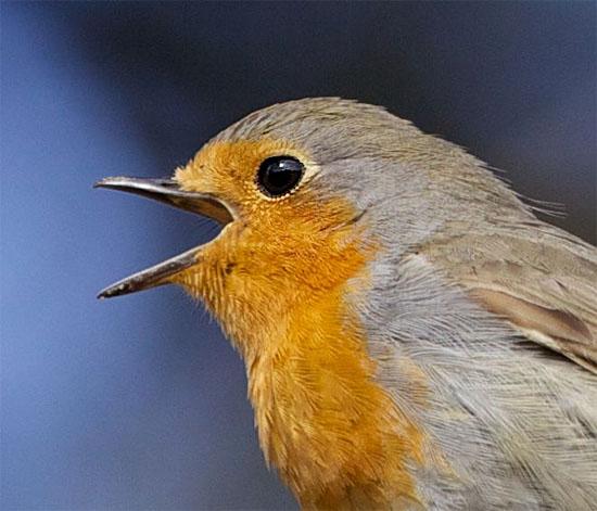 6º sentido dos pássaros é finalmente confirmado pela ciência - Img internet