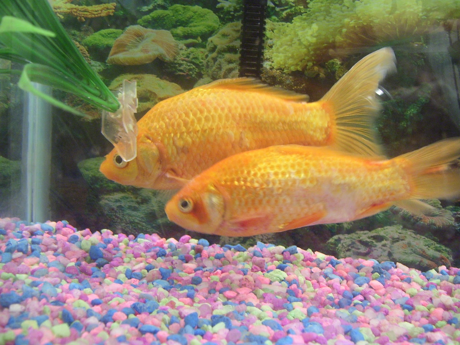 Koi Ponds Causes For Excess Ammonia Which Always Includes