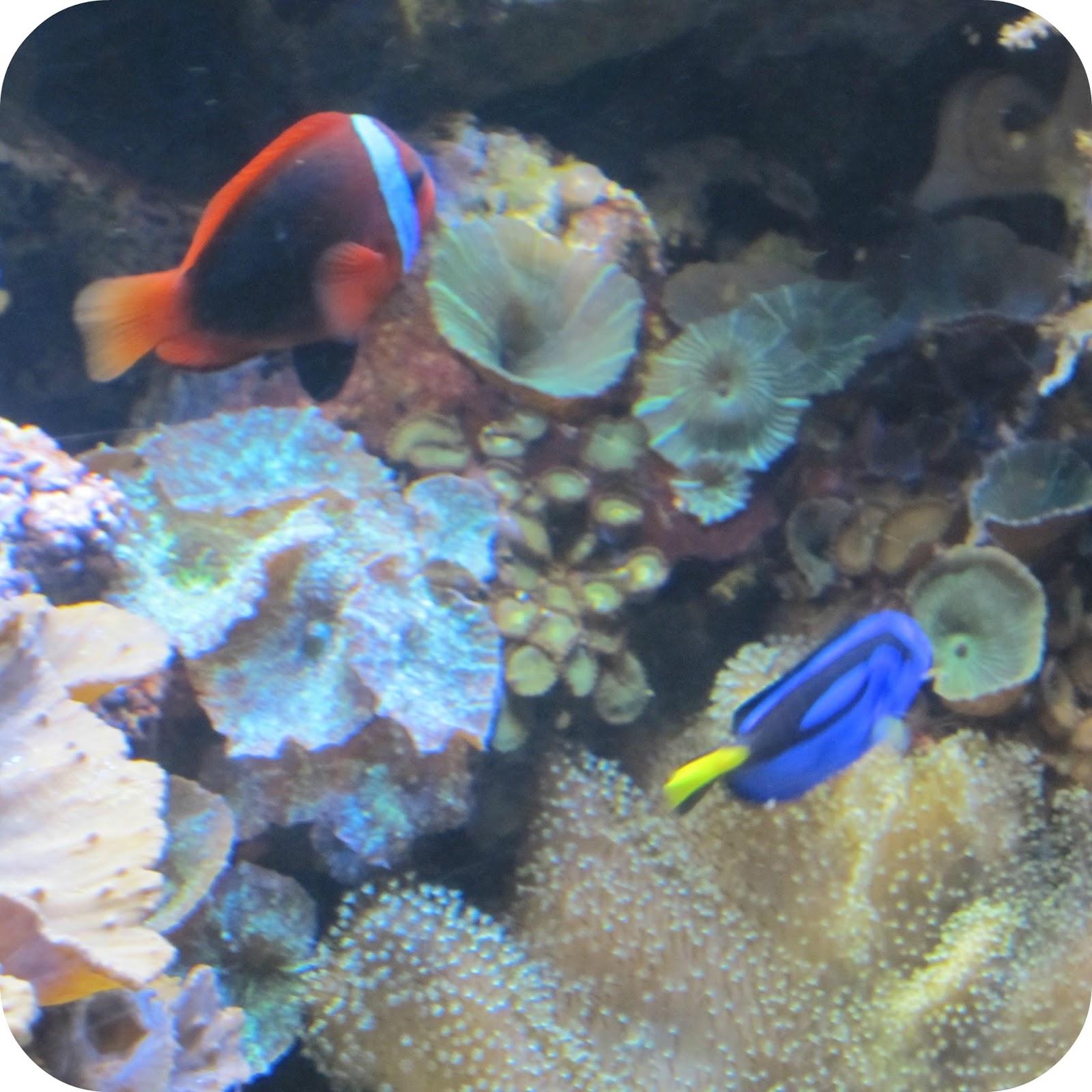 Seahorse Finding Nemo