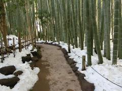 雪と竹の庭