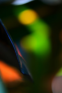 croton plant abstraction