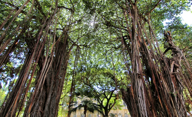 Jardín de la Compañía en Port Louis Isla Mauricio