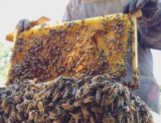 Έτρεχαν τα κεριά και τα μέλια από τον καύσωνα: Τα μετρά που πήρε ο μελισσοκόμος...