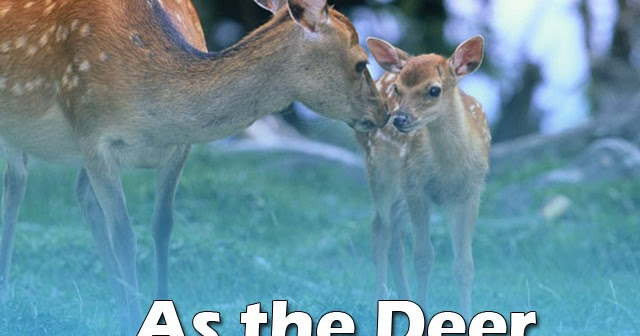 As The Deer Gospel Song Music Letter Notation With Lyrics For