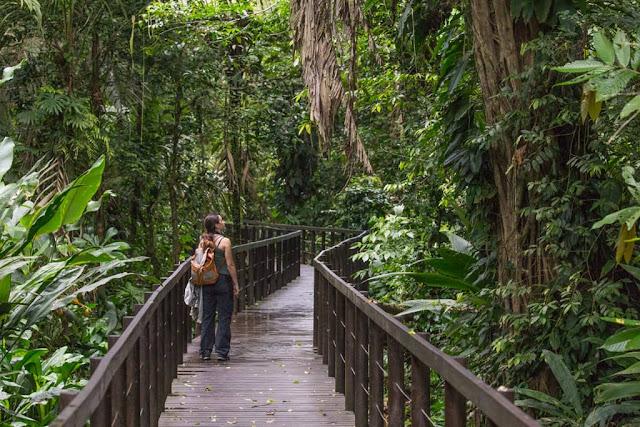 Paseando por los senderos del Parque nacional Cahuita en Costa Rica