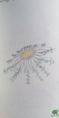 dziewiątka, zaklęcie dziewięciu ziół, zielnik, rośliny, kwiaty, botanika, zielarstwo, rysunki, rysunek, sztuka