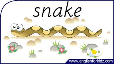 snake flashcard